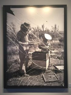רדיית דבש במכוורת גן שמואל / זולטן קלוגר / 1958