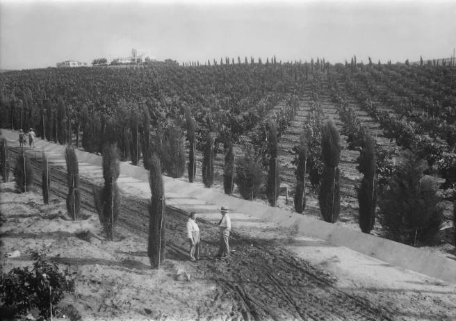 פרדס הדרים בגן רווה / שמואל יוסף שויג / 1935
