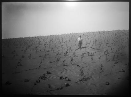נטיעת עצי אקליפטוס בנחלת יהודה/שמואל יוסף שוייג/1925