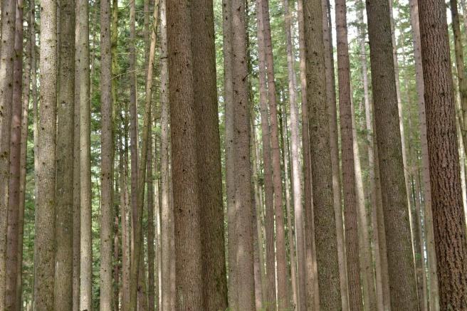 יער בלין קניון