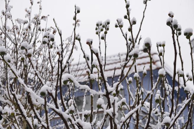 שלג ראשון