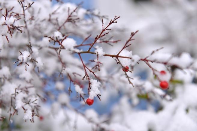 שלג בונקובר