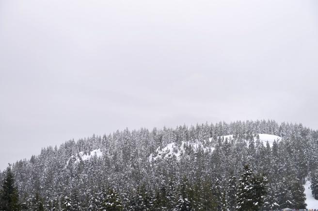 הר סימור