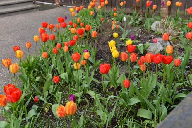 אביב בונקובר