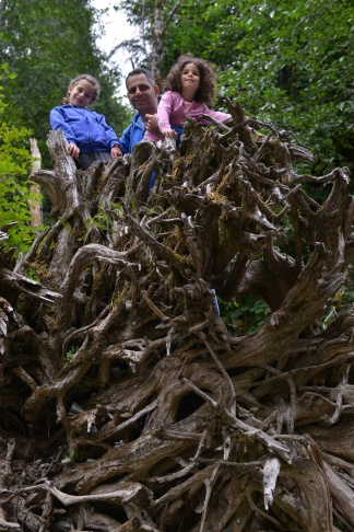 יער צילום גלית לוינסקי
