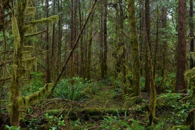 יער גשם קנדי צילום גלית לוינסקי