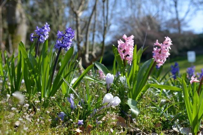 אביב וקורונה גלית לוינסקי