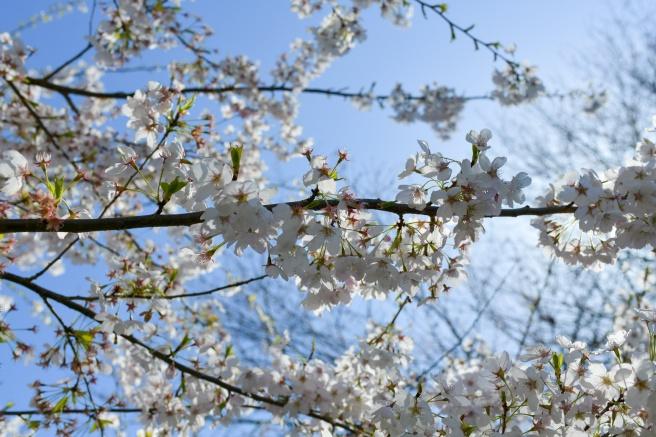אביב בונקובר גלית לוינסקי